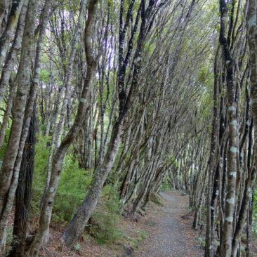 Typischer Abschnitt auf dem Great Walk Rakiura Track