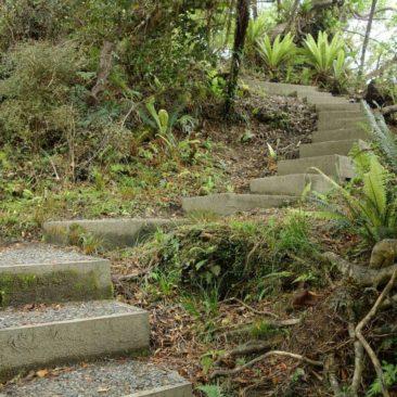 Sogar richtige Treppen gibt es auf dem Great Walk Rakiura Track