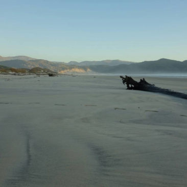 Treibholz am Strand von Doughboy Bay