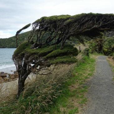 Der Wind formt vieles auf der Insel