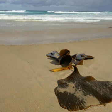 Angeschwemmte Stücke Seegras