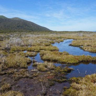 Ein Teil des Sumpfes auf dem Weg zur Fred's Camp Hut