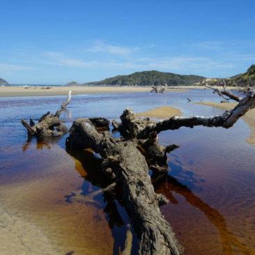 Treibholz-Stillleben am Strand von Doughboy Bay
