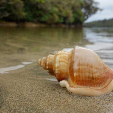 Fotos: Eindrücke von Stewart Island (Neuseeland)