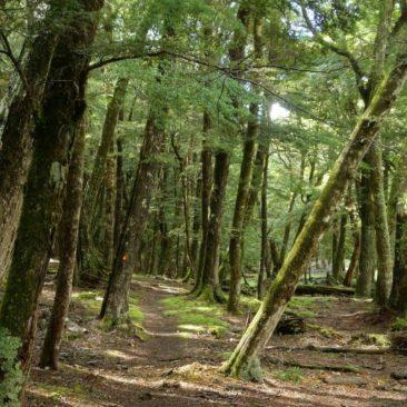 Der Trail im unteren Teil des Caples River Tales