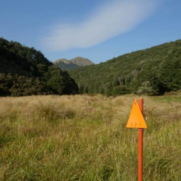 Sumpfiges Gelände hinter der Kiwi Burn Hut