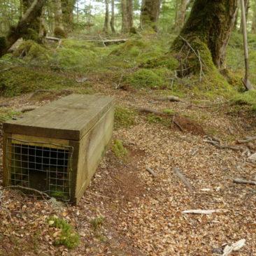 Diese Fallen sieht man häufig in Neuseeland. Sie sollen helfen, der eingeschleppten Ratten, Hermeline und anderer Nager Herr zu werden.