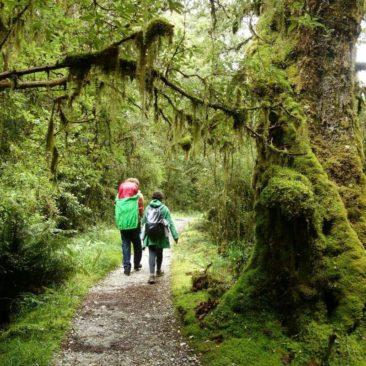 Teilweise ist der Milford Track breit genug für zwei Wanderer