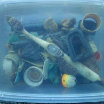 Mageninhalt eines verendeten Albatrosses - Plastik im Meer ist ein RIESIGES Problem