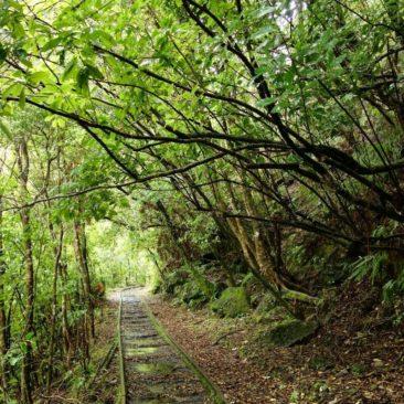 Früher Eisenbahnstrang, heute Wanderweg - der Charming Creek Walkway