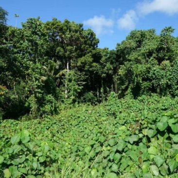 Undurchdringlicher Urwald, sobald man die Straße auch nur wenige Meter verläßt