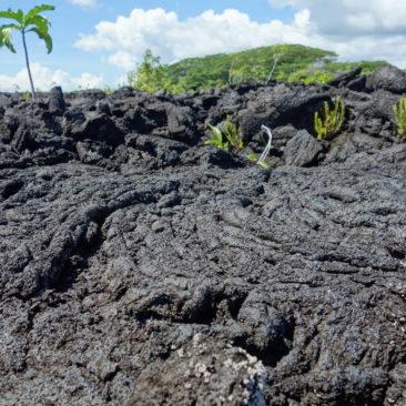 Schon lange erstarrter Lavastrom und die Wiederbesiedlungsversuche der Pflanzen