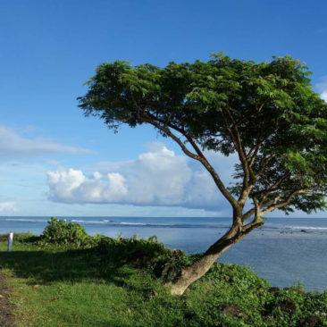 Der Wind formt auch auf Samoa die Pflanzen