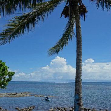 Südseeklischee - Palme und Auslegerkanu