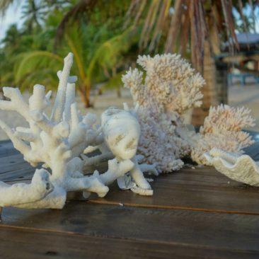Tote, angespülte Korallen und Muscheln