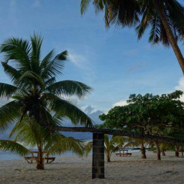 Mit ein bisschen Hilfe kann auch diese Kokosnusspalme weiterwachsen