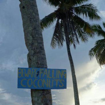 Wichtiger Hinweis, denn herunterfallende Kokosnüsse töten erstaunlich viele Menschen