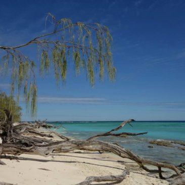 Abgestorbene Bäume am Strand von Lady Musgrave Island