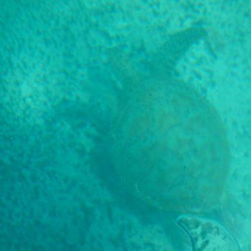 Durch das Glasbodenboot konnten man auch mit nicht wasserdichten Kameras Fotos von den Schildkröten machen