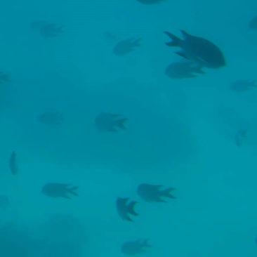 Auch die Fische ließen sich gerne fotografieren