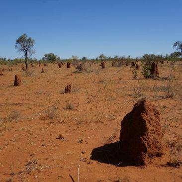 Ameisen scheinen sich In diesem Teil Australiens besonders wohl zu fühlen und siedeln hier zuhauf