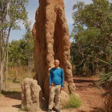 Die Termiten bauen zum Teil riesige Bauten