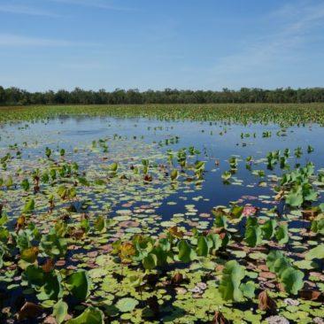 Eines der Billabongs (Wasserlöcher) im Kakadu Nationalpark