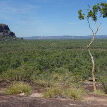 Ausblick auf die Weite des Kakadu Nationalparks und Nourlangie Rock