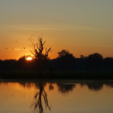 Sonnenaufgang am Yellow Water Billabong