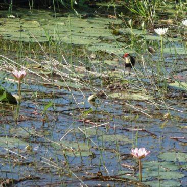 Solange das Wasser da ist, gedeiht das Leben prächtig im Kakadu Nationalpark