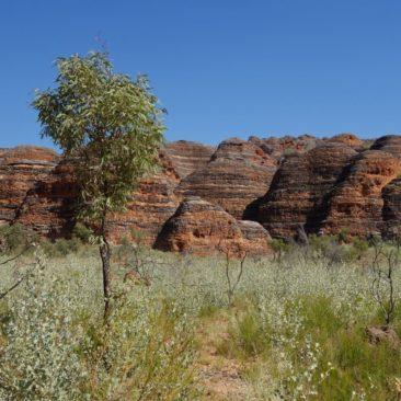 Viele der Felsen in der Bungle Bungle Range haben eine bienenstockartige Form