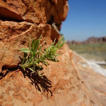 Die vielen Risse im Fels bieten Pflanzen Möglichkeiten, um sich dort anzusiedeln