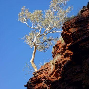 Bäume wachsen an den unmöglichsten Stellen