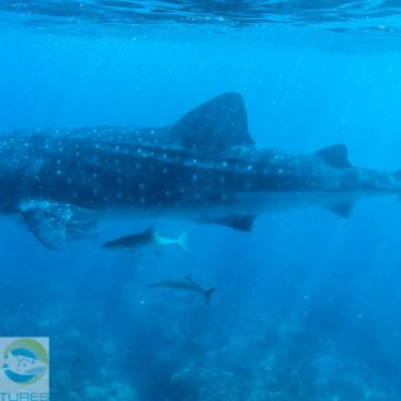 Sechs Meter Fisch