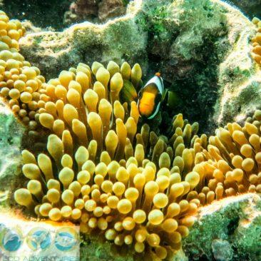 Auch Clownfisch Nemo haben wir gefunden