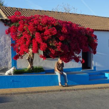 Ländliche Idylle in Portugal