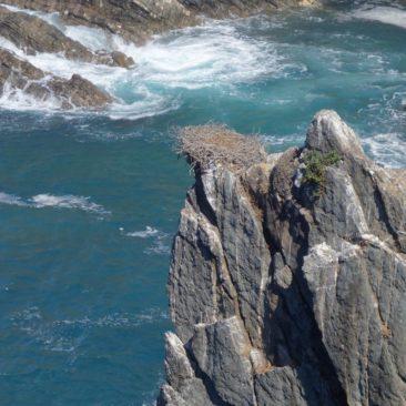 Storchennest an einer Steilklippe.
