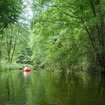 Durch Wald- und Wiesenlandschaft auf dem Rheinsberger Rhin
