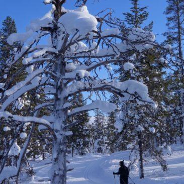 Winterskulptur und Winterwanderer